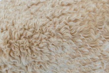 vervuild tapijt verwijderen